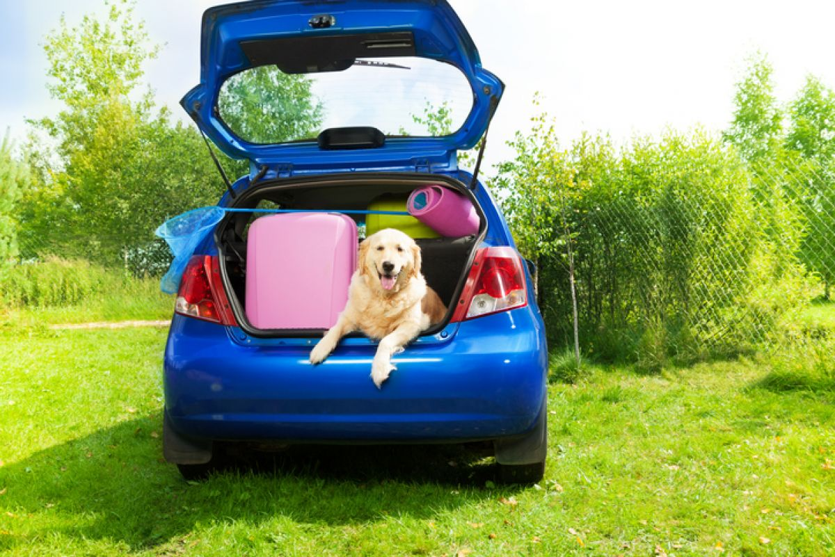 7 Family Hatchbacks With The Biggest Boots