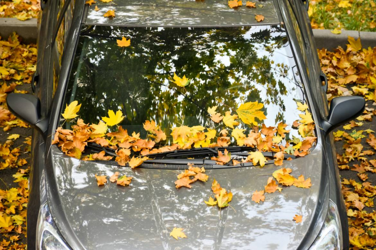 7 Autumn Driving Tips Image 5