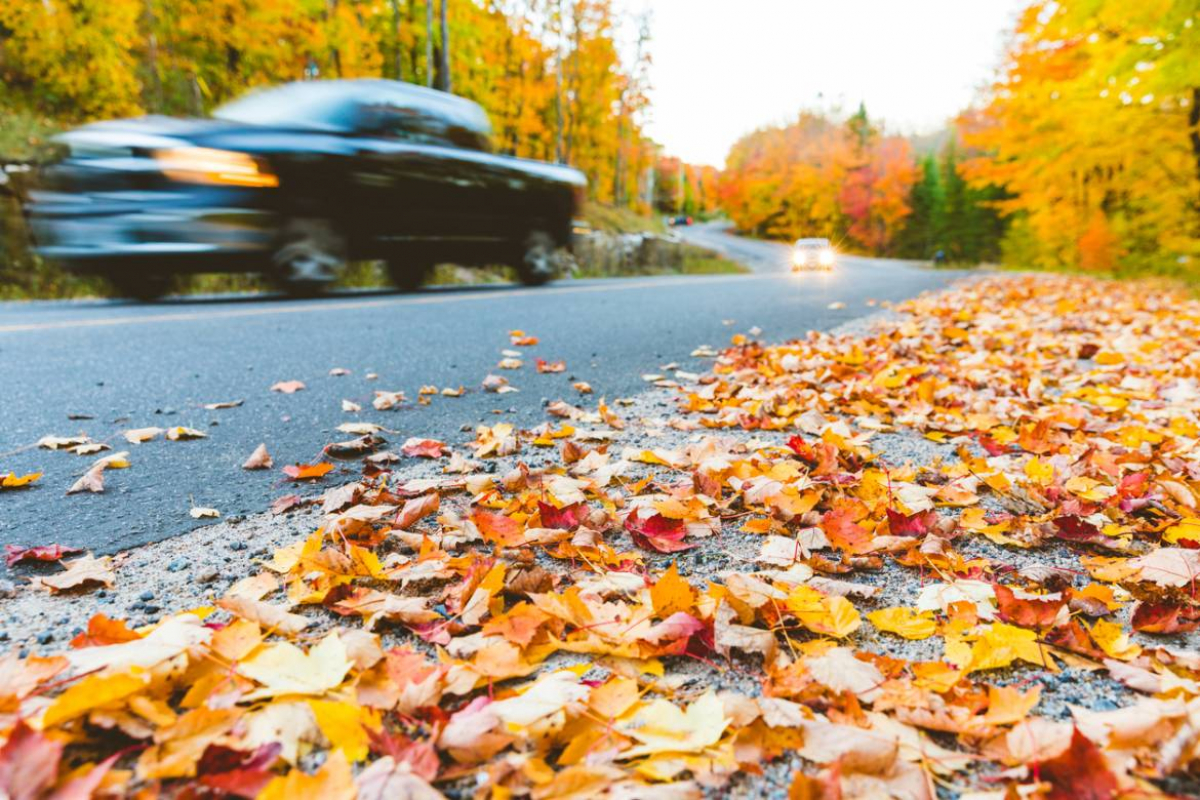 7 Autumn Driving Tips Image 6